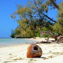 Les îles du Pacifique, un milieu naturel exceptionnel