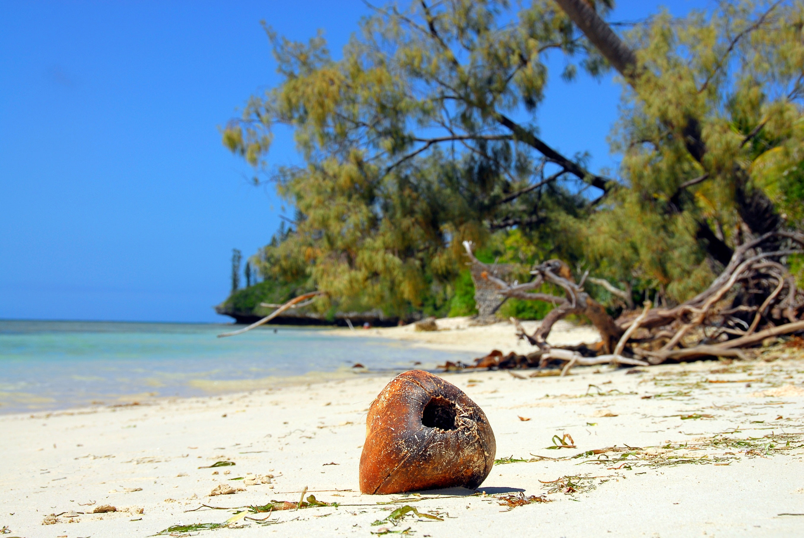 Les îles du Pacifique bénéficient d'un milieu naturel exceptionnel.