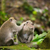Bali, une destination riche en évasion