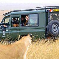 Vous rêvez de faire un safari, mais où et quand dois-je le faire?