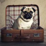 voyage-chien