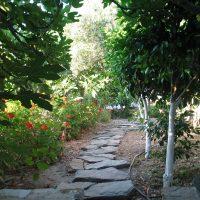 Gastronomie et tavernes de l'île de Tinos