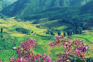 Dien Bien Phu Discovery
