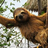 Autotour Costa Rica : un road trip de rêve!