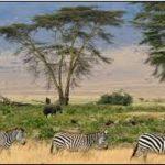 afrique arthur