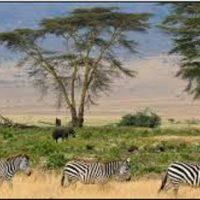 Le Ronjo Camp et les espèces animales qui y vivent