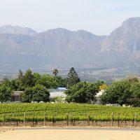 Visite de vignoble : une activité touristique incontournable
