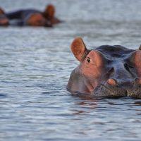 Cap sur la zone de l'Océan Indien : Le trapèze des Mascareignes
