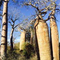 S'aventurer en quad dans le sud de Madagascar