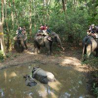 Le parc national de Chitwan pour admirer des rhinocéros
