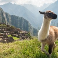 Comment organiser un voyage personnalisé au Pérou ?