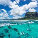Faire de la plongée sous-marine à l'Ile Maurice pour des vacances exceptionnelles