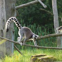 Les plus belles attractions touristiques naturelles à Madagascar