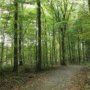 Forêts d'Ile de France, la verdure pour se relaxer le week-end