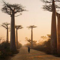 Comment voyager en sérénité à Madagascar ?